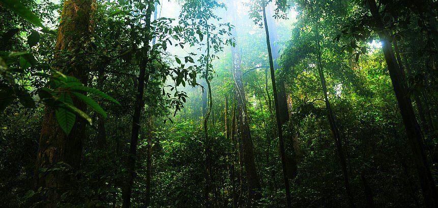 Neo-Dschungel
