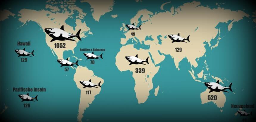 Was Surfer Uber Haiangriffe Wissen Sollten