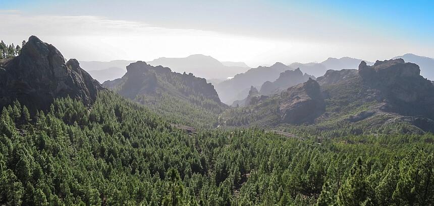 Gran Canaria Wald